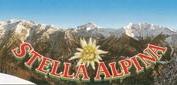 ma_stella_alpina